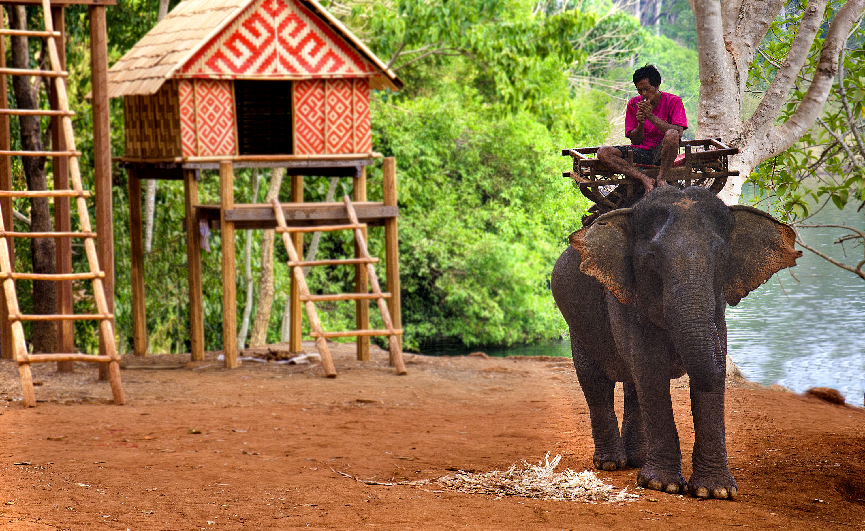 About: An Asian elephant, ridden by a Tampuan man