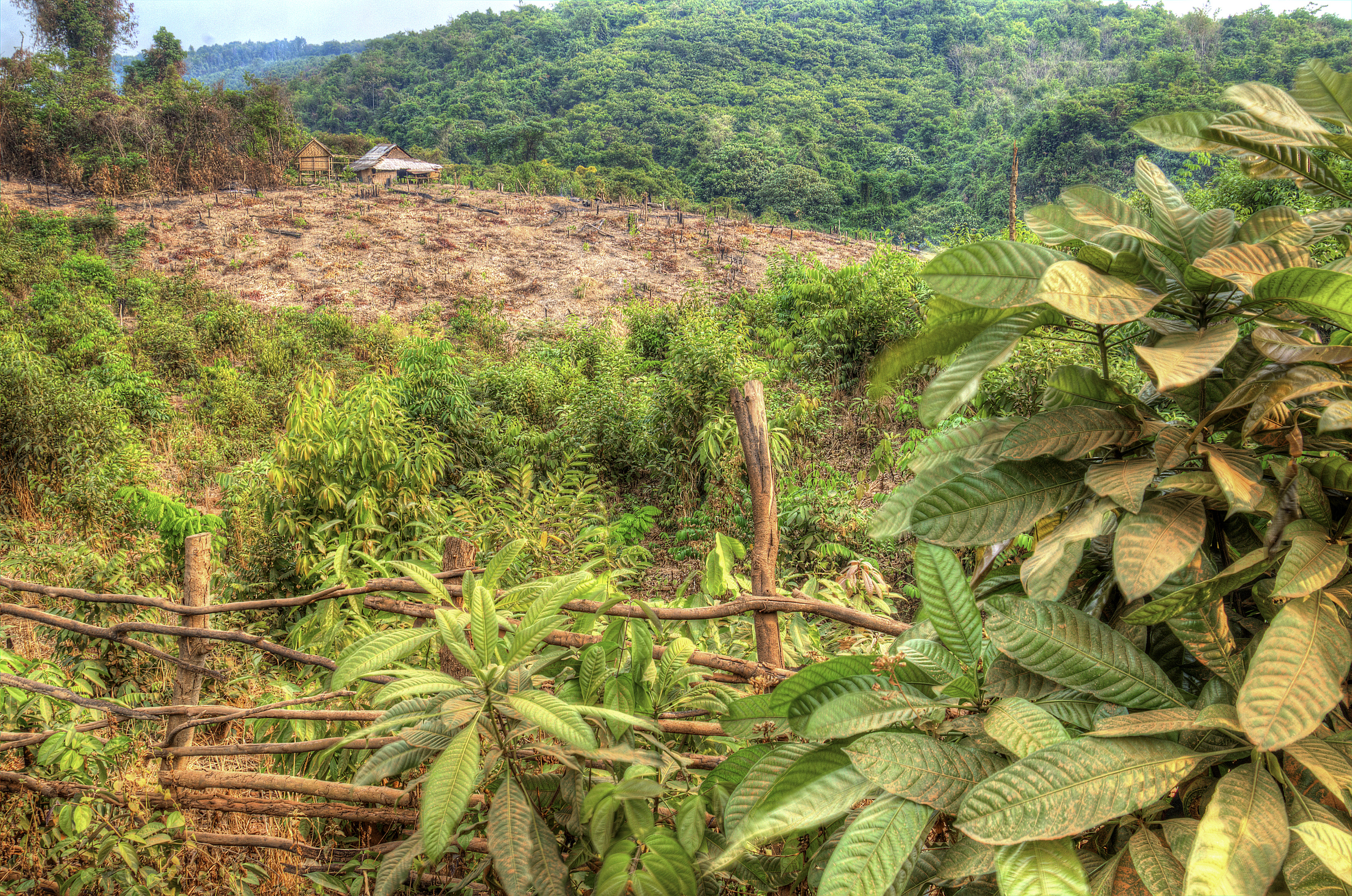 Montanyard Krung farm slash and burn for planting dryland rice.